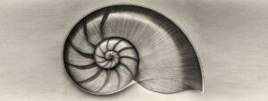 Marc-Fish-nautilus-sepia-banner
